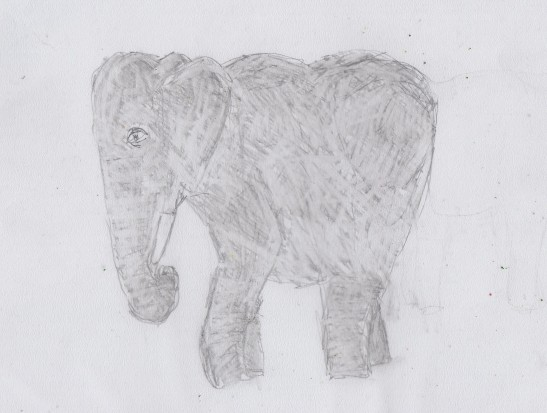 March6_elephant3